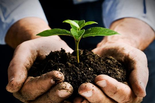 Odla din trädgård